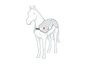bemer veterinary line deken 2